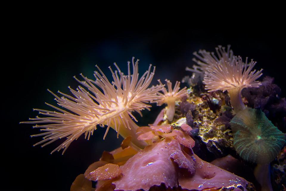 coral migración especies marinas