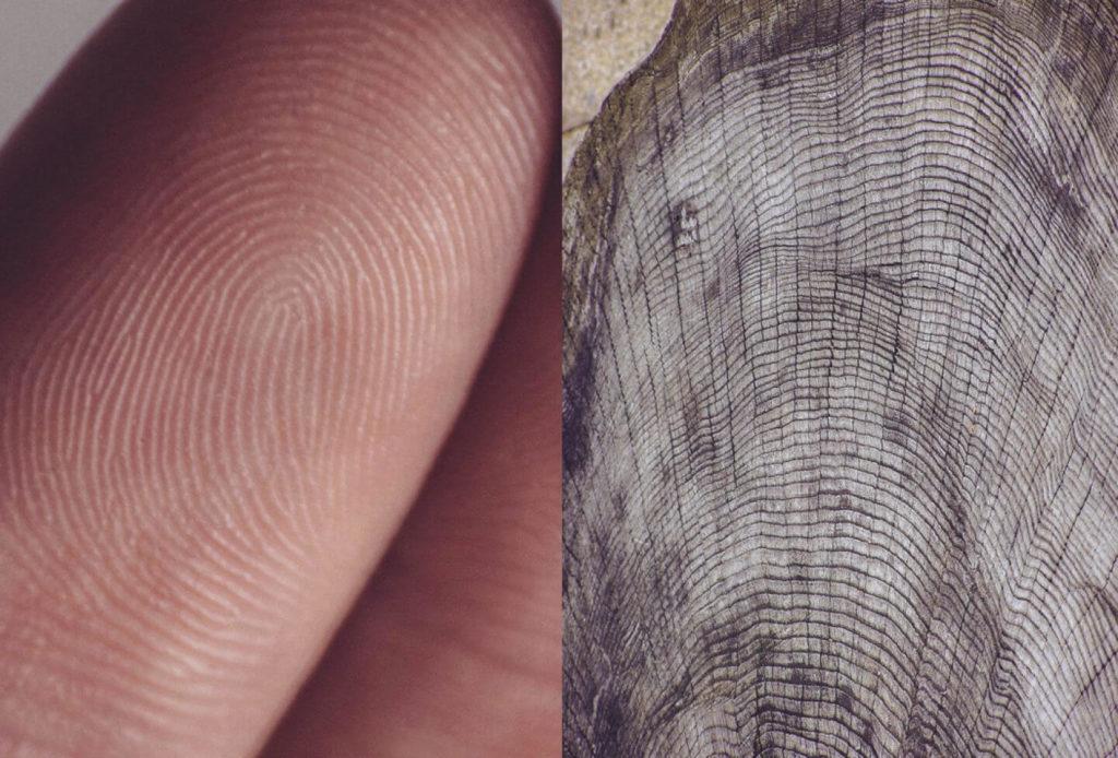 Te asombrará conocer la cercana similitud del cuerpo humano y el cosmos, donde se conjugan para demostrar su estética con una parte de la naturaleza.