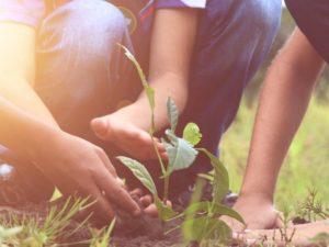 plantar un árbol graduarse