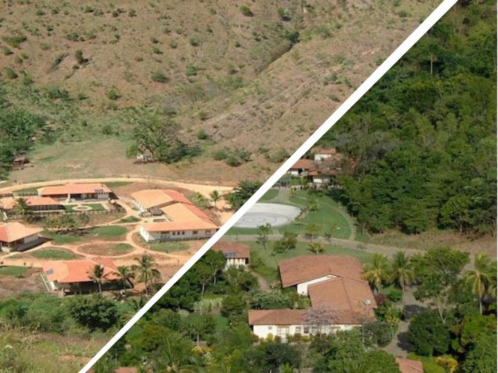 proyecto de reforestación